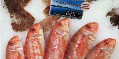 Etal d'une poissonnerie présentant du rouget barbet