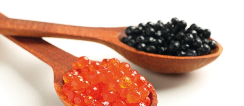 Guide des espèces : caviar oeufs esturgeon