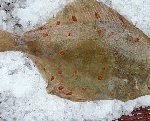 Photographie d'une plie sur de la glace