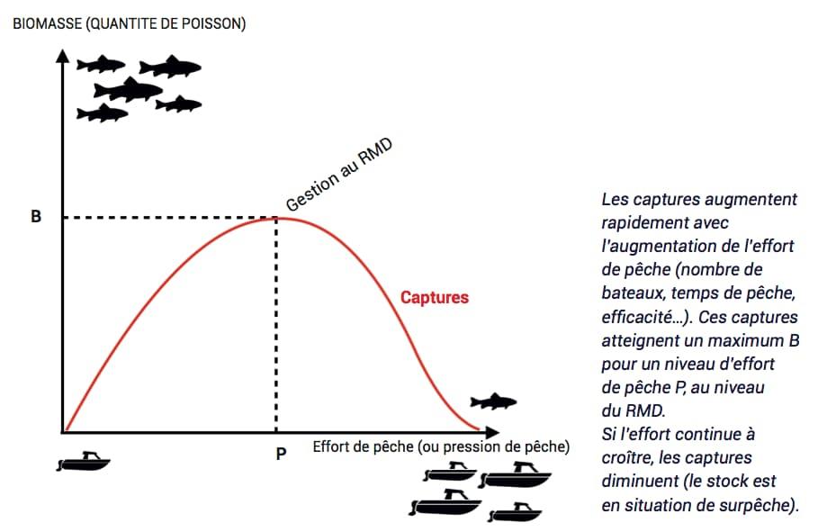 Graphique gestion stock halieutique : rendement maximum durable