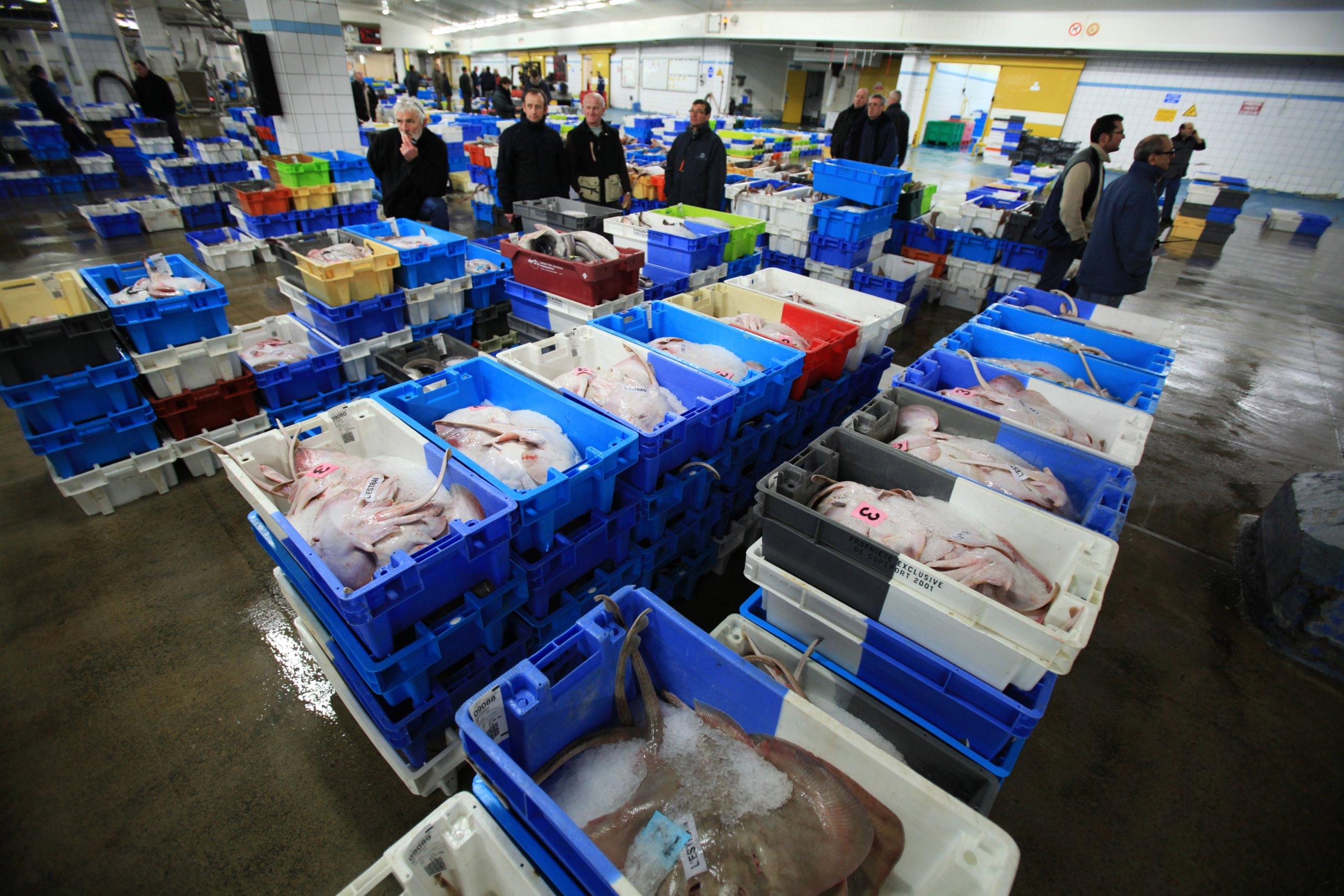 Une criée approvisionnement produits de la mer